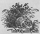 Беляк любит травянистые вырубки
